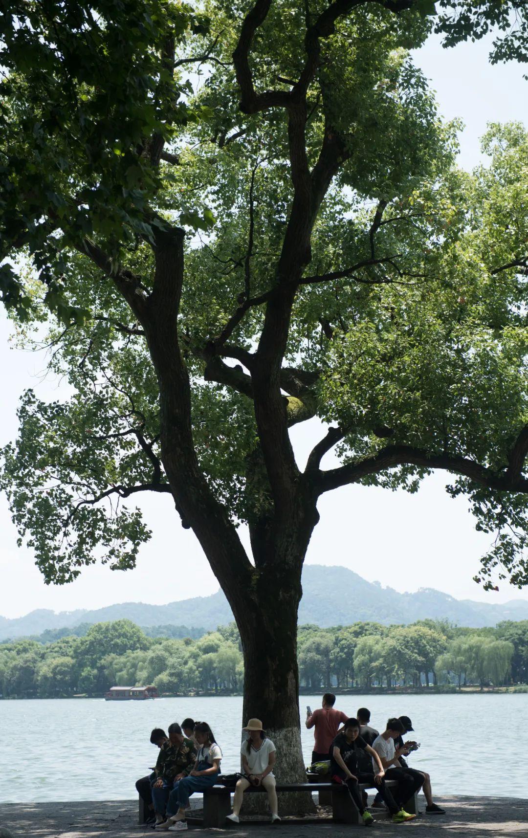 立秋|乳鸦啼散玉屏空,一枕新凉一扇风