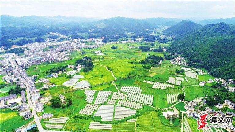凤冈县绥阳镇 坝区建设有方向 产业发展有看头