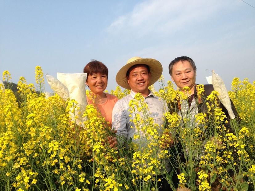 """湖南农民父子坚持40多年,研究培育的杂交油菜种子有了""""身份证"""""""