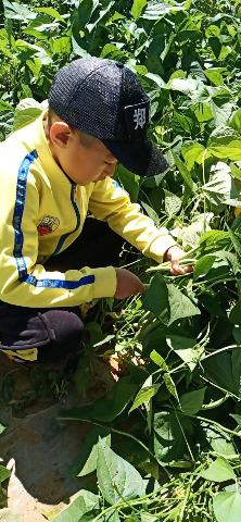 【劳动实践】呼和浩特黄合少镇第一中心校开展暑期劳动实践活动