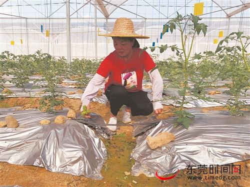 走向我们的小康生活|盘活千亩农田,村民有工作享分红