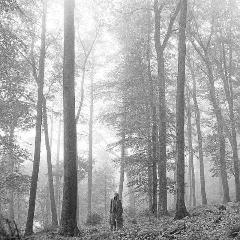 鉴证科 |《Folklore》:疫情之下,直面孤独