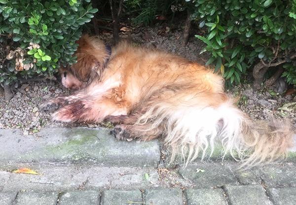 上海首例养犬人遗弃犬只案:罚五百元 吊销犬证