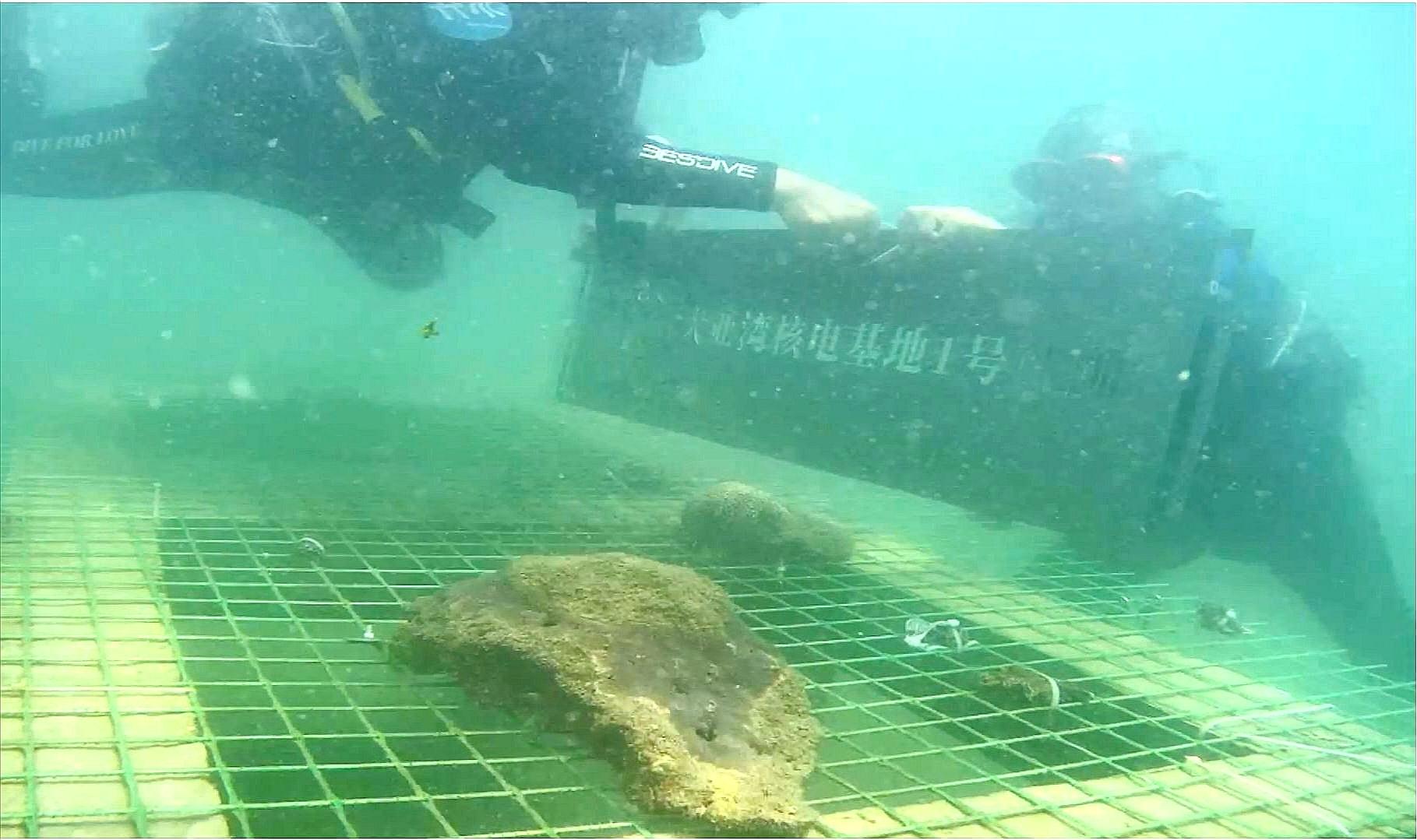 """核电基地周边海域水质如何?中广核直播""""核电站海底种珊瑚"""""""