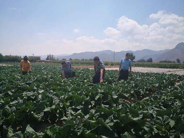 兰州丨3家企业9个无公害农产物被复查