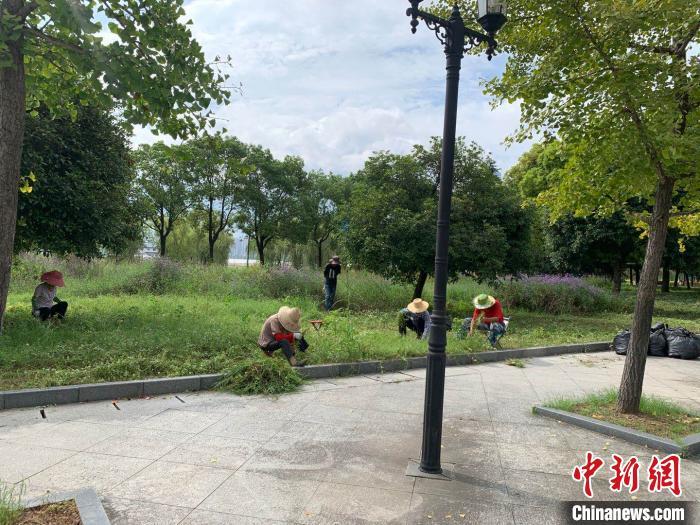 图为园内职工正在举行修剪杂草事情 武一力 摄