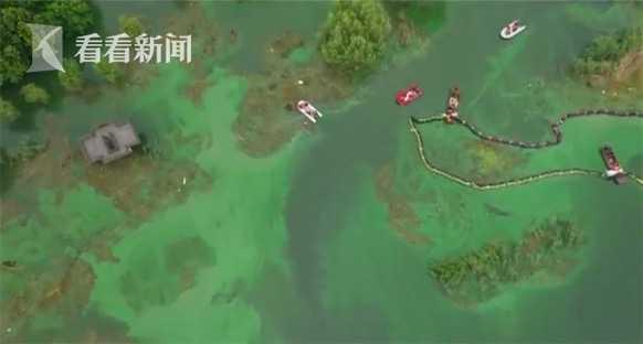 安徽:巢湖沿岸蓝藻集聚 集中治理初见成效