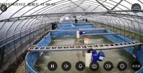 帆布包高密度养虾每平方米可产11.5公斤
