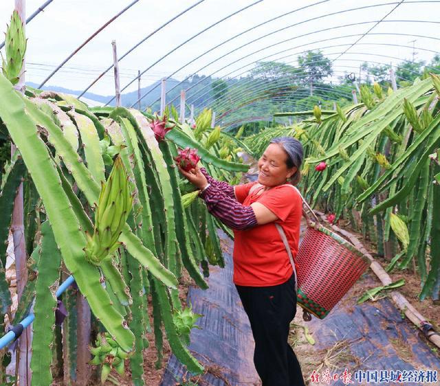 四川西充:有机果蔬基地