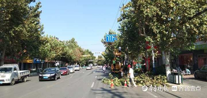 """追事丨这些遮挡枣庄城区主干道的绿化树开始""""理发""""啦"""