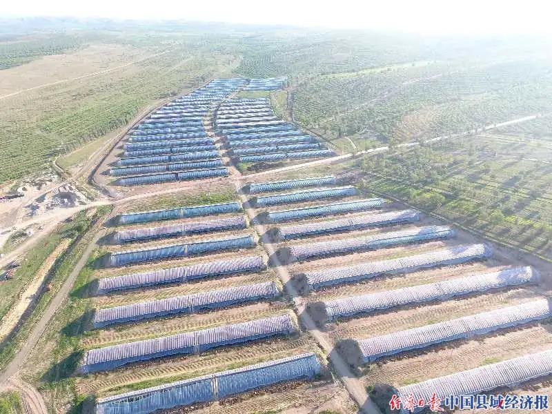 内蒙古林西大井镇:以产业促扶贫 帮助农
