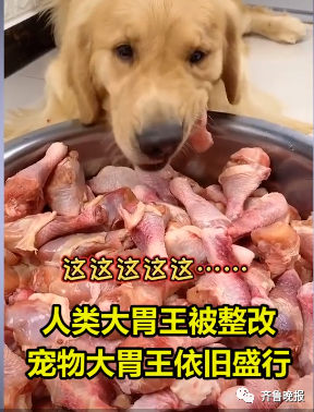 宠物博主让狗当大胃王,一次吃100种零食!网友怒斥(图2)