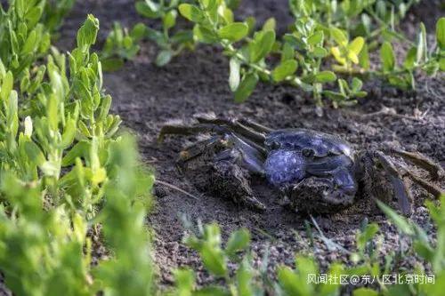 螃蟹漫步在沙漠腹地旁的水岸
