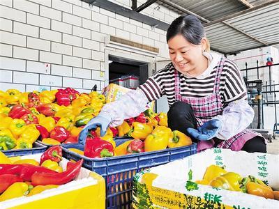 河北崇礼:种错季节菜赢金饭碗