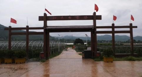 临沂蒙阴县:以葡萄产业为