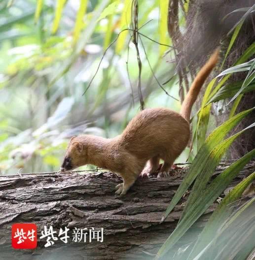 全国科普日 南京洪山动物园邀您守护身边的野生动物