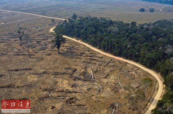 世界森林面积减少近亿公顷 非洲及东南亚受影响严重