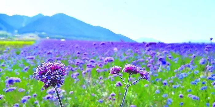 新疆最美的秋天是给你的 九月乌鲁木齐南