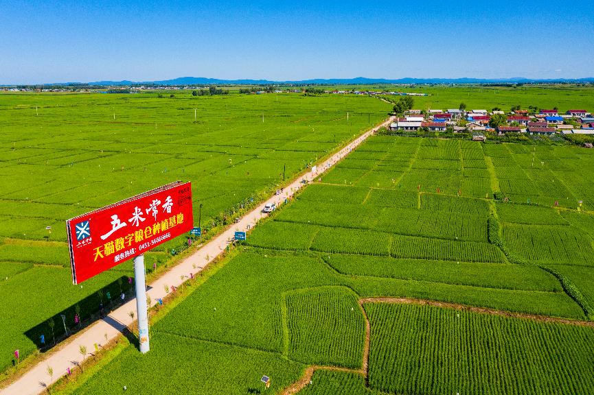 三年助农销售5400亿!阿里成为农产品销售和品牌打造第一平台图片