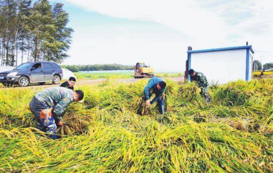 自然恢复4.1万亩人工扶正1.7万亩齐齐哈尔甘南县抗灾自救降低农业生产损失