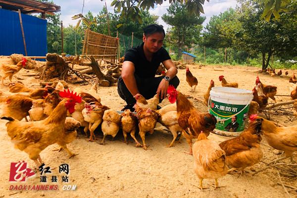 道县:返乡农民工放养土鸡奔富路