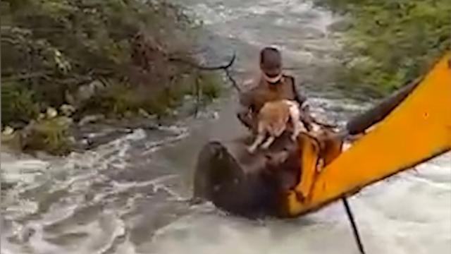 暴雨过后一只流浪狗被卡在灌木丛中 印度警方出动铲车救援