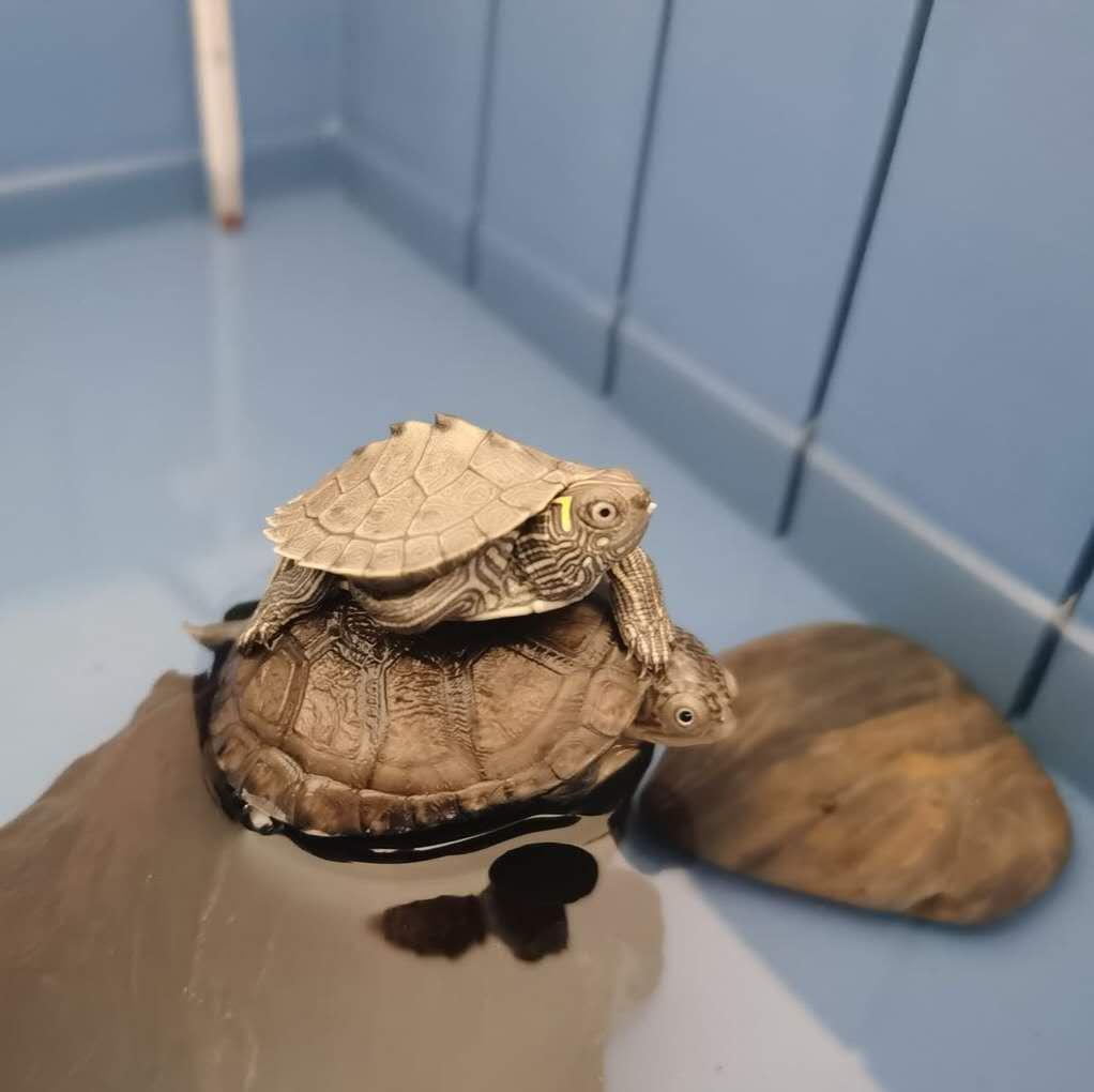 <strong>宝应某女生两年养了50多只乌龟 可能是心</strong>