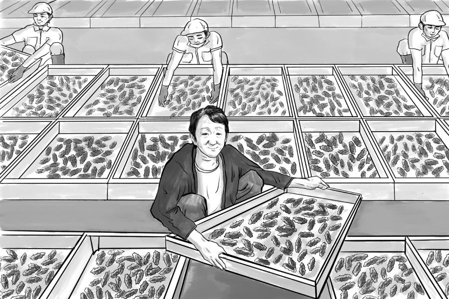 野生海参营养食疗价值缘何高