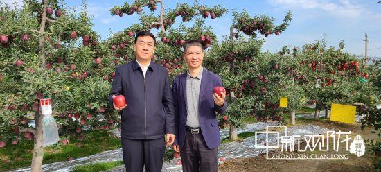 天水电信5G慢直播助力花牛苹果线上销售