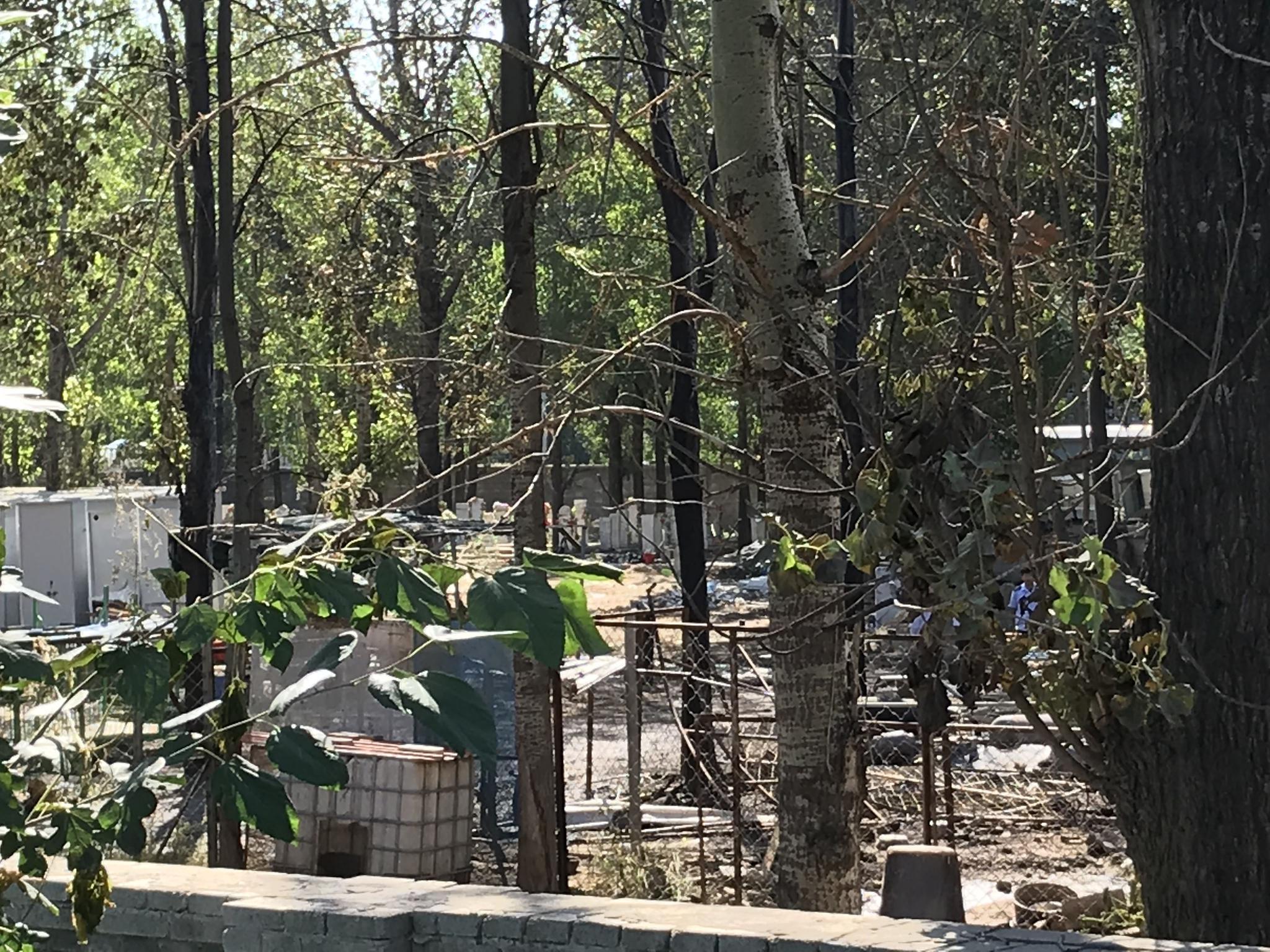 9月19日上午,事故现场多数液化气罐已被转移,部分树木被烧焦。新京报记者 张惠兰 摄