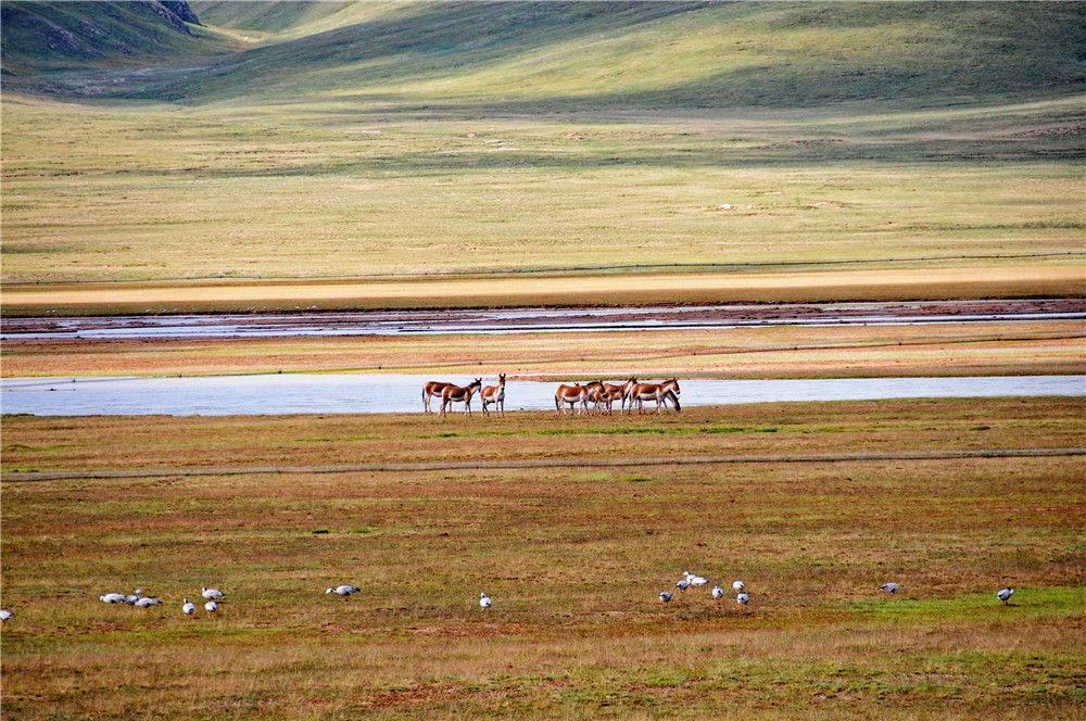 黄河源头:千湖再现 生态好转图片