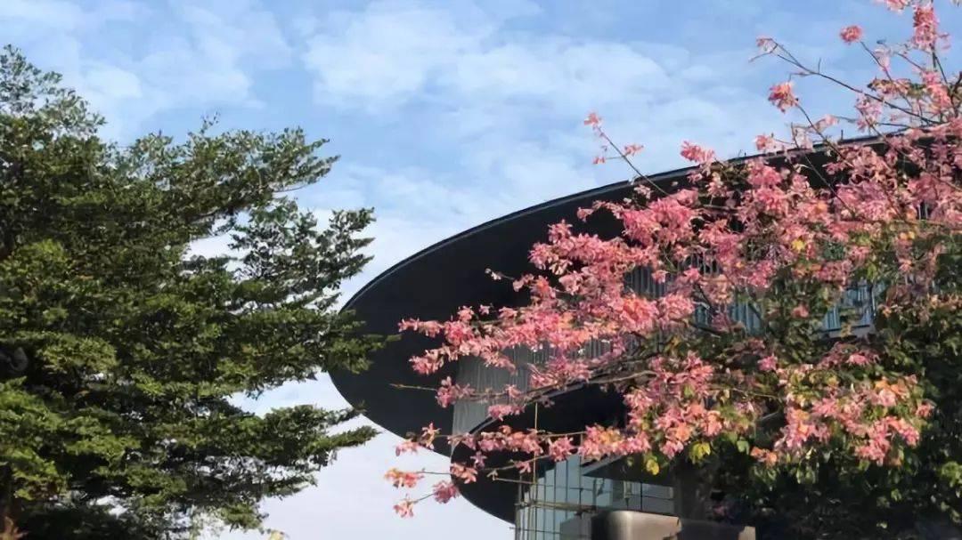 安藤忠雄中国新作 | 和美术馆要开放了!