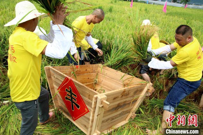 迎中国农民丰收节 福建农民田间地头享丰收图片