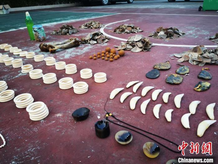 广西崇左警方破获特大非法贩运濒危野生动物制品案图片