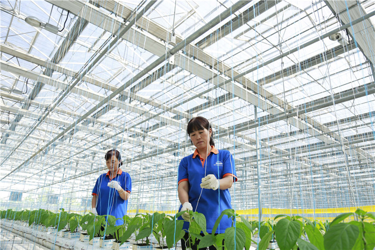 河北邢台:建设现代农业园区
