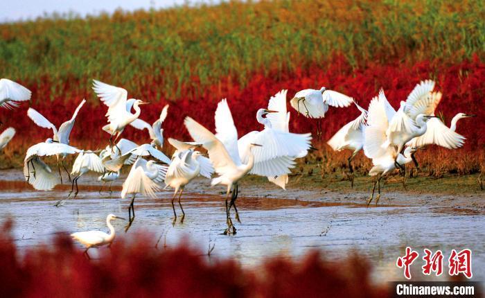 """""""良禽""""择""""地""""而栖 黄河三角洲每年吸引近600万只鸟类停靠"""