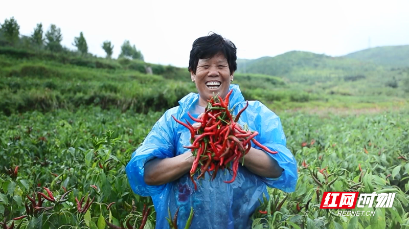 桂阳:丰收的五爪辣映红了致富路
