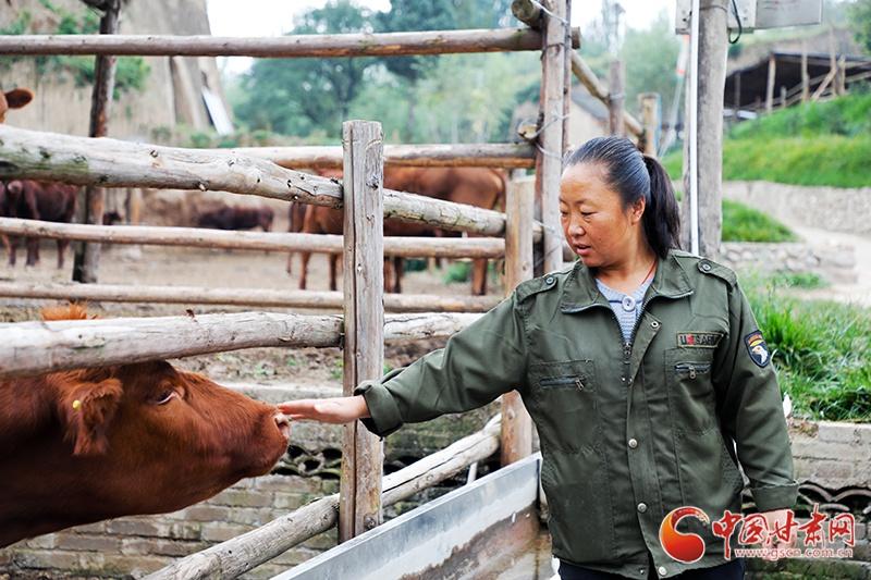 【中国梦 黄河情】甘肃崇信:废旧窑洞养红牛 探生态富民新路子