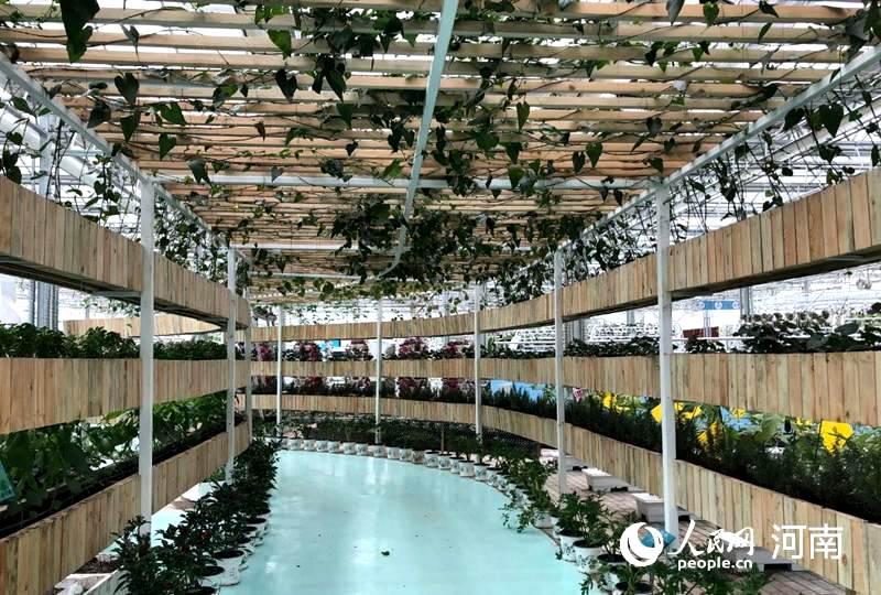 2020年中国农民丰收节将在河南开封举行图片