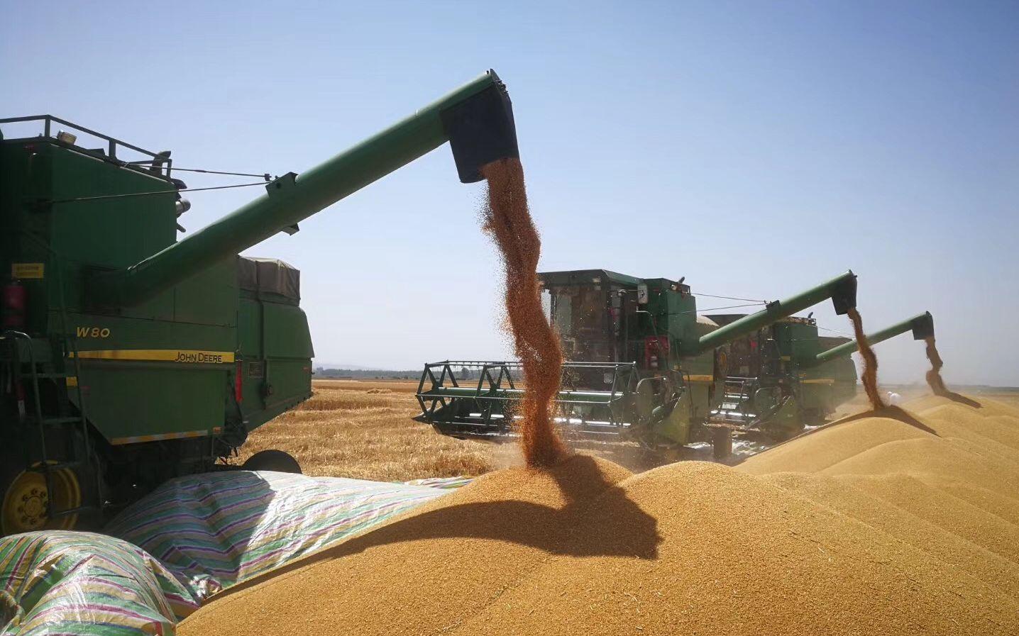 新京报:种子大量依赖进口 农业会不会遭遇
