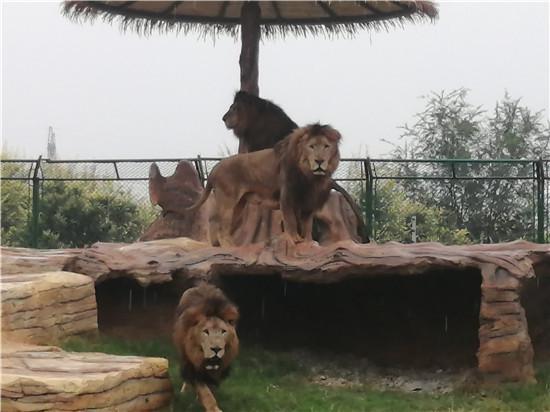 周口市森林野生动物园22日开放 园区多区域开放 市民可购票体验