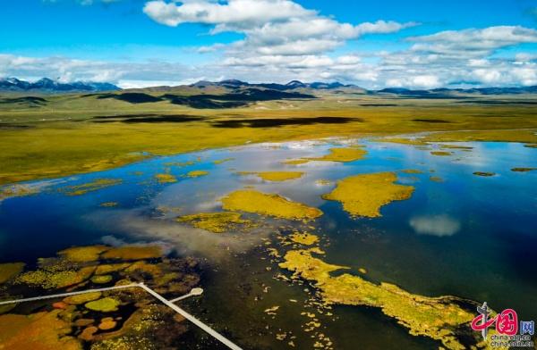 【中国梦•黄河情】若尔盖多措并举优化湿地生态系统 保护黑颈鹤家园
