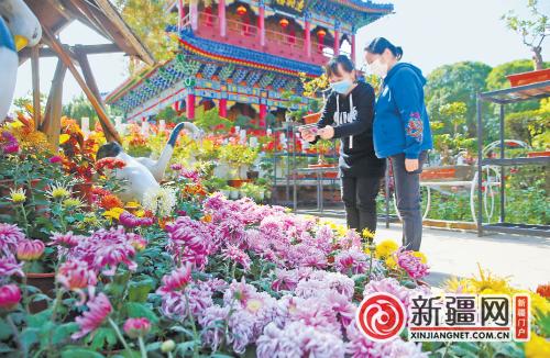 红山公园菊花展开展20余种万余盆菊花邀你来赏