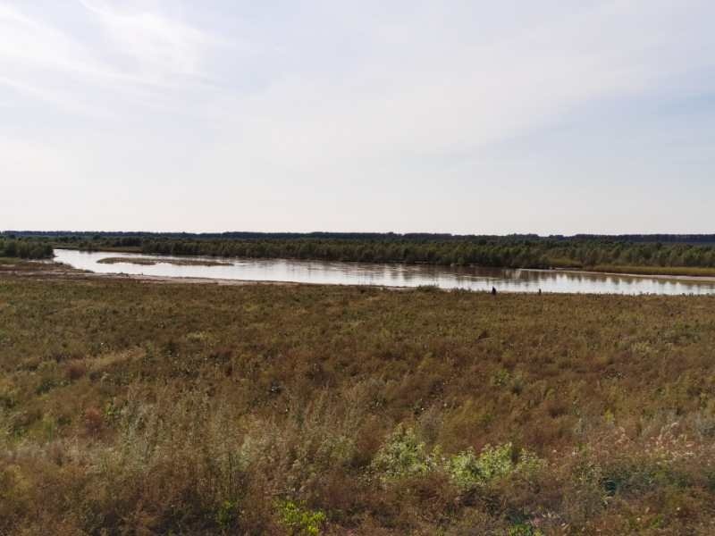 生态封育成效显著 辽河干流昌图段河滩地植被覆盖率达到100%、滩地草原已经形成