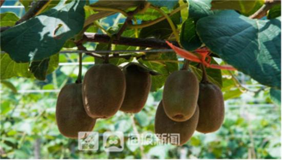 【摘园游】青州青峰谷青峰村昌邑溧水花园滨海田燕现代农业旅