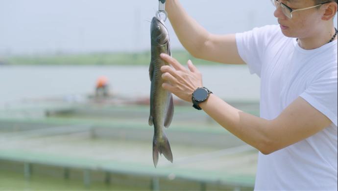 生态智能化!溧水有一座无人化渔场!农民穿着西装养鱼…