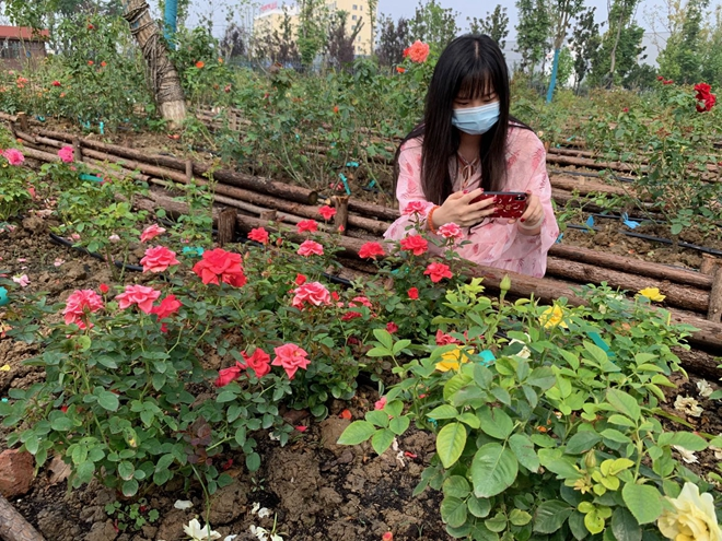 第十届中国月季展览会本周六开幕