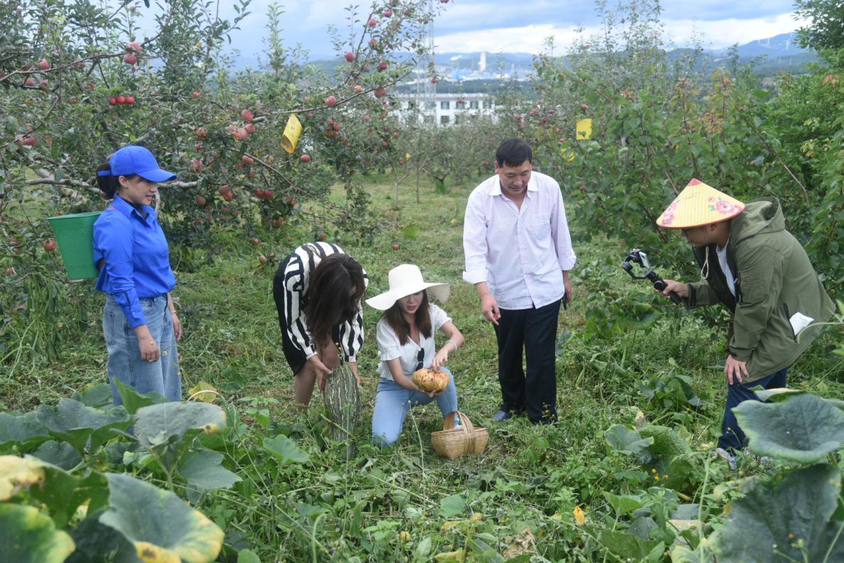 中国农民丰收节 云南安宁开展直播带货助力电商发展
