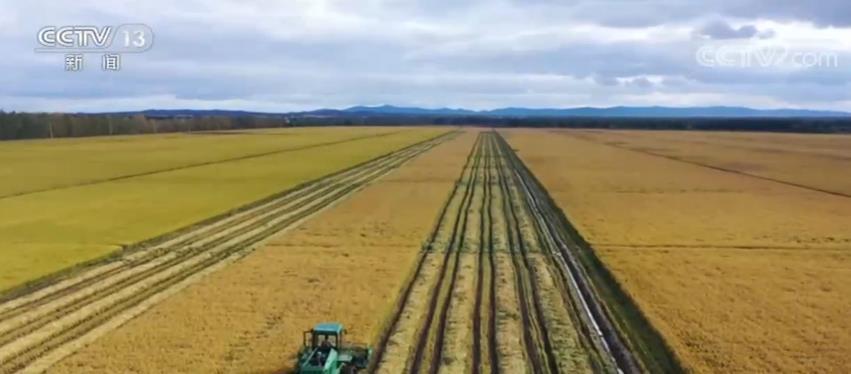 秋粮丰收成定局 全年产量1.3万亿斤以上图片