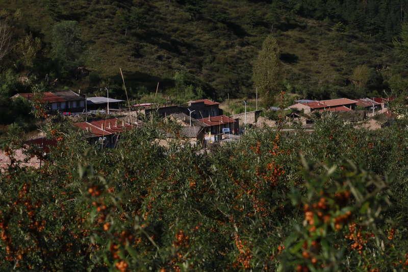 北京设计周联手颐和园,给吕梁山区做高颜值沙棘果汁